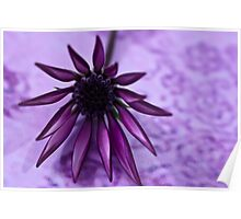 Gazania Flower Macro - Lavender Background  Poster