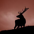 Red deer by Ranald