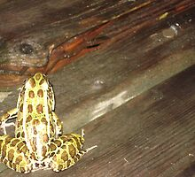 Frog venturing across the deck by Becky Hartin