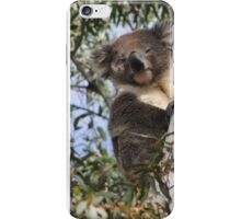 Koala - Coromandel Valley, South Australia iPhone Case/Skin