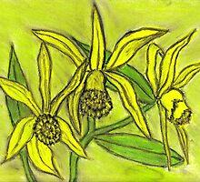 ORCHIDS   by NEIL STUART COFFEY