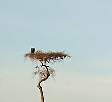 Lone tree on the Masai Mara by Holly Michelle Garland