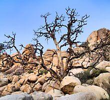 "Joshua Tree National Park Series - ""A Hard Life""  by Philip James Filia"