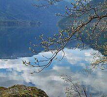 Mountain Reflections by Lynn Bawden