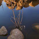 Joshua Tree National Park Series - Barker Dam Area by Philip James Filia