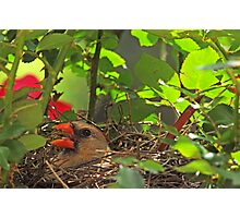 Life with Mrs. Redbird Photographic Print