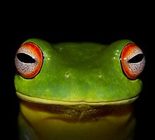 Green Tree Frog by jaclyn-kavanagh