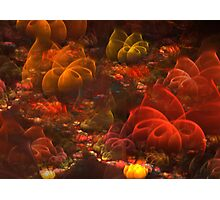 Reef Photographic Print