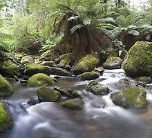 Evergreen by Mark Jones