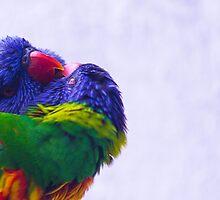 Bird kiss by moppics