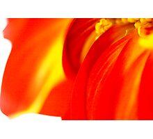 Macro Floral Photographic Print