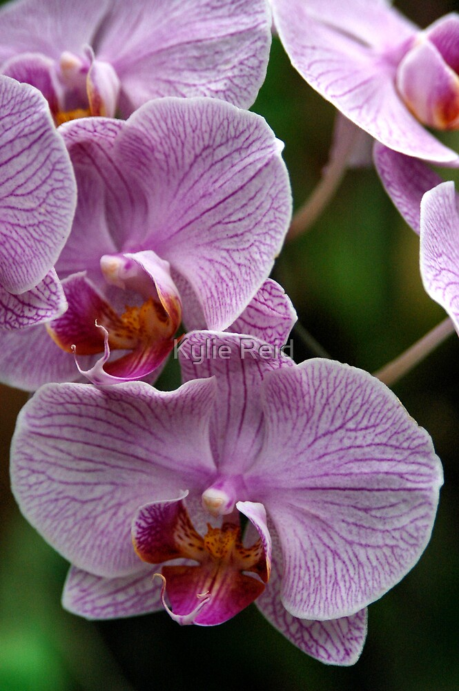 Kandy Botanical Garden by Kylie Reid