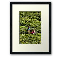 Tea Plantation Framed Print
