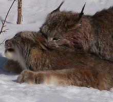 Mating rituals by alaskanaj