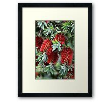 Bunch Of Aussies Framed Print