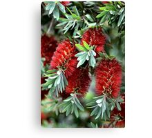 Bunch Of Aussies Canvas Print