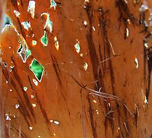 Through the Paperbark........ by debsphotos