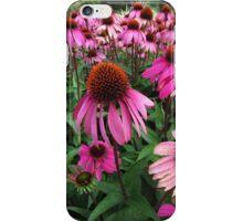 Echinacea's ( Coneflowers ) iPhone Case/Skin