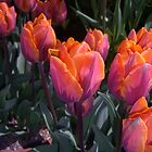 Spring Glow by ZELLEN