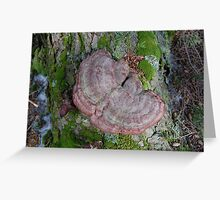 red tree fungas Greeting Card