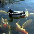 Duck on fish by moonstone