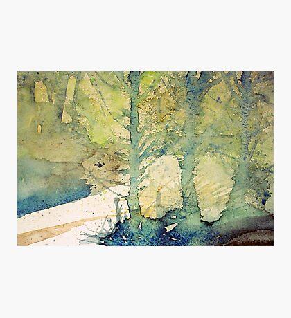 fir trees Photographic Print