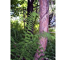 wading in ferns Photographic Print
