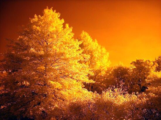 Tree's On The Sun by Jeff  Burns