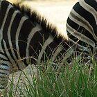 Stripes by AlbertoG
