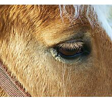 Lovely Lashes Photographic Print