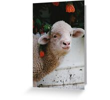 Caught in the Hibiscus! Greeting Card