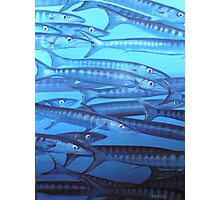 Barracuda blues Photographic Print