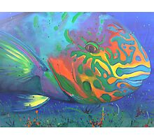Parrot fish Photographic Print