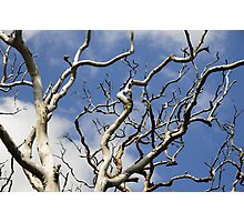 Dead Wood Photographic Print