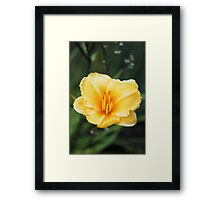As You Wish, Buttercup Framed Print