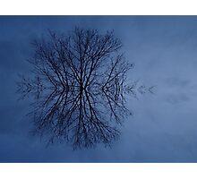 Snowflake? Photographic Print