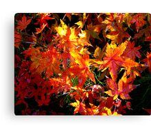 Autumn is Here... Canvas Print