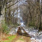 Scary Trail In Winter by WildestArt