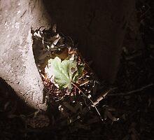 Fallen Leaf by Kodak