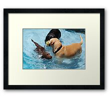 The Labs Framed Print