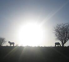 Equine Sunset by dannyknightuk