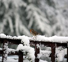 Robin in the snow by Harlequitmix