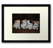 Kindred Kittens Framed Print