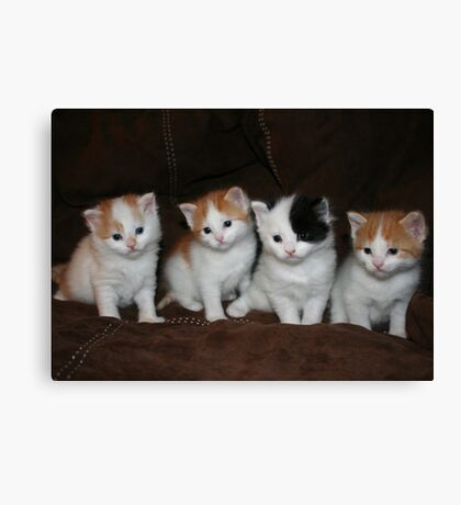 Kindred Kittens Canvas Print