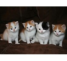Kindred Kittens Photographic Print