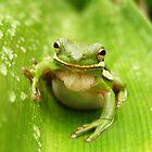 Closeup in Green by Jocelyn Hyers