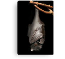 Bat on Black Canvas Print