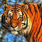 Amur Tiger by Caroline Bland