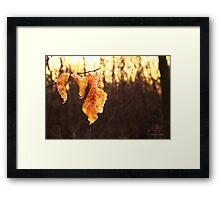 Russet Reminders... Framed Print
