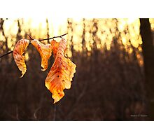 Russet Reminders... Photographic Print